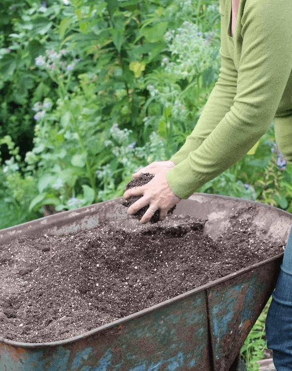 hỗn hợp đất trồng