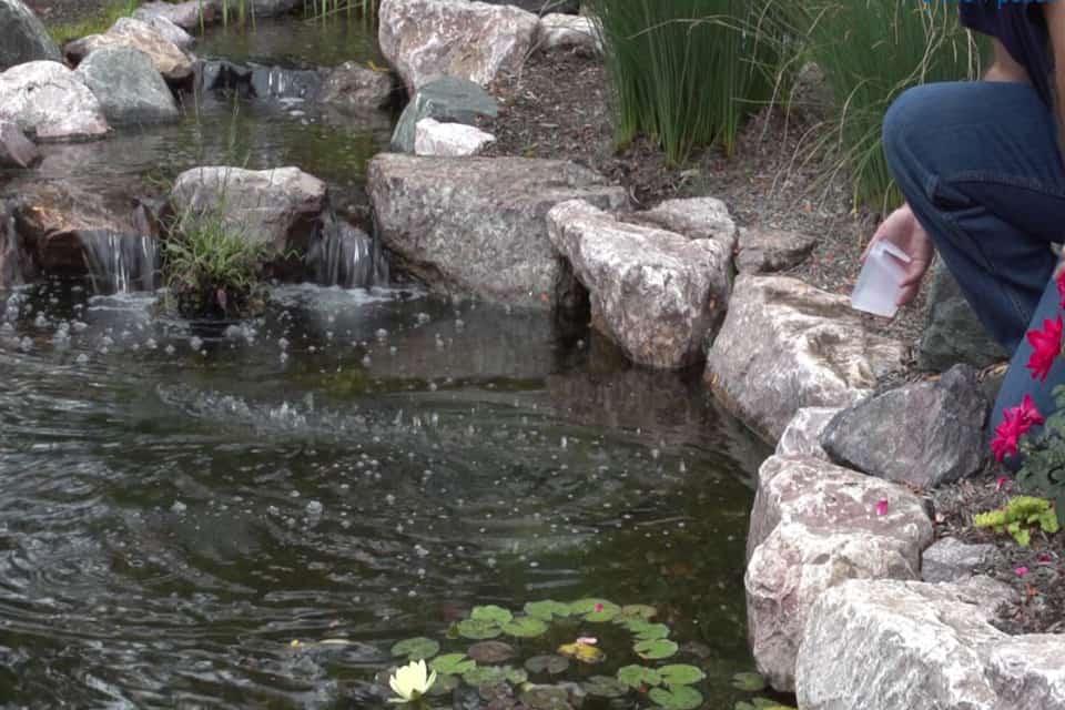 Muối lọc hồ cá Koi 1