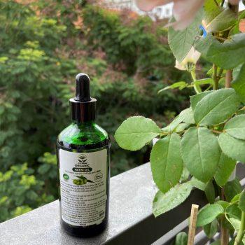 dầu neem nguyên chất ép lạnh 1