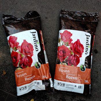 đất trồng hoa hồng jadino rosen 1