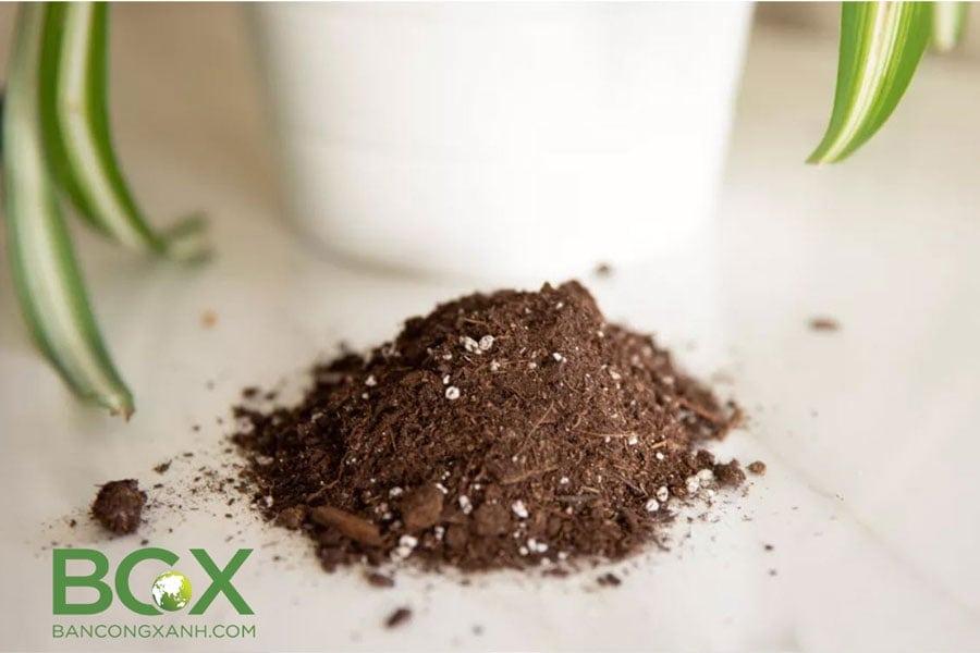Cải tạo đất trồng cây trong chậu, cây nội thất 1