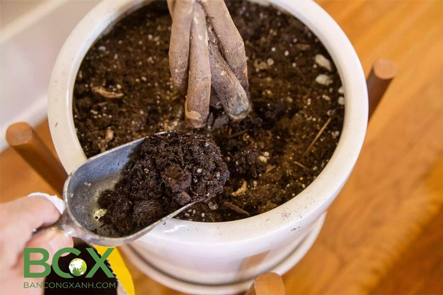 Cải tạo đất trồng cây trong chậu, cây nội thất