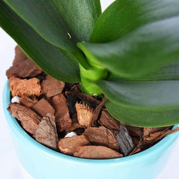 Giá thể trồng Hoa lan cao cấp Tropical Premium 2.1