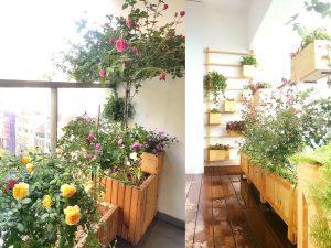 Chậu gỗ trồng hoa hồng