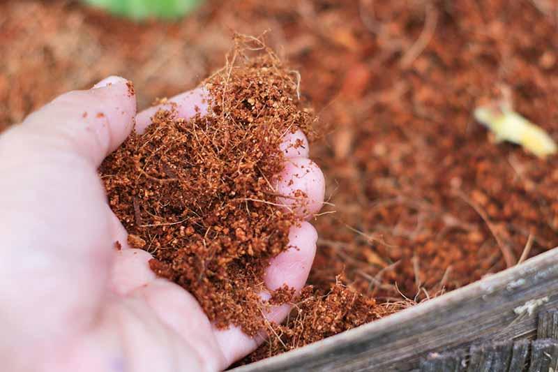 So sánh xơ dừa với Peat moss