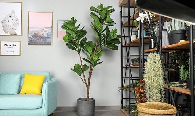 Bạn cần đảm bảo cây được sinh trưởng phát triển trong môi trường tốt nhất
