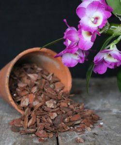 Giá thể cho hoa lan