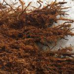 Dương xỉ trồng lan 2