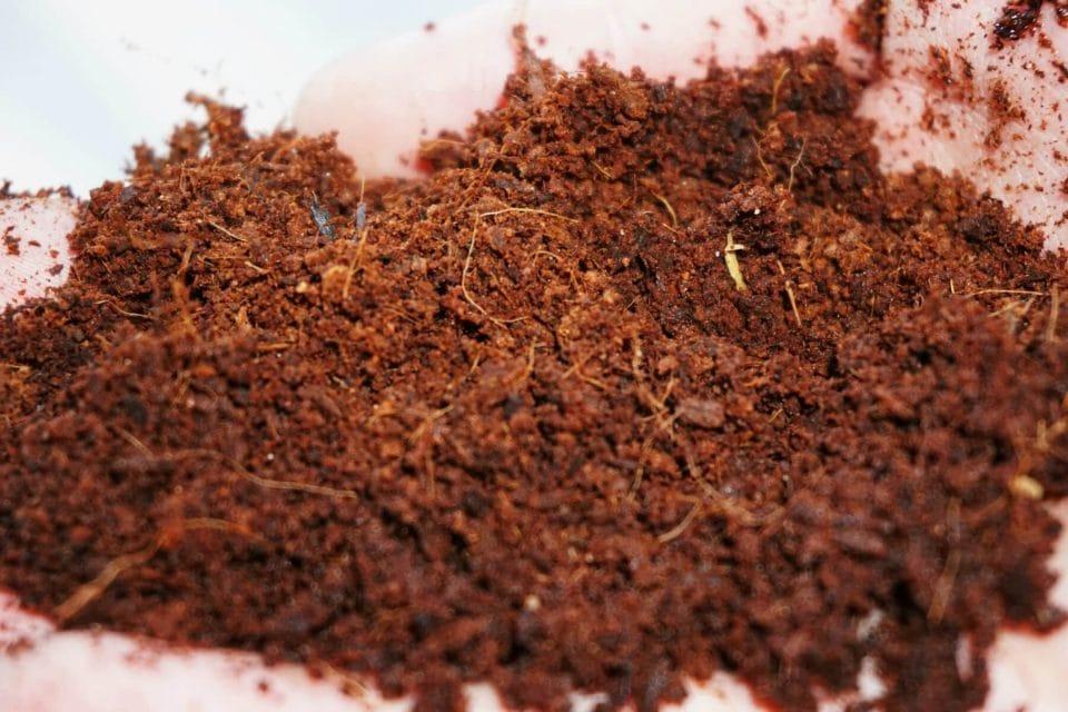 Mụn xơ dừa có những loại nào - ứng dụng như thế nào trong trồng trọt