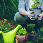 6 sai lầm phổ biến khi làm vườn mà bạn nên tránh