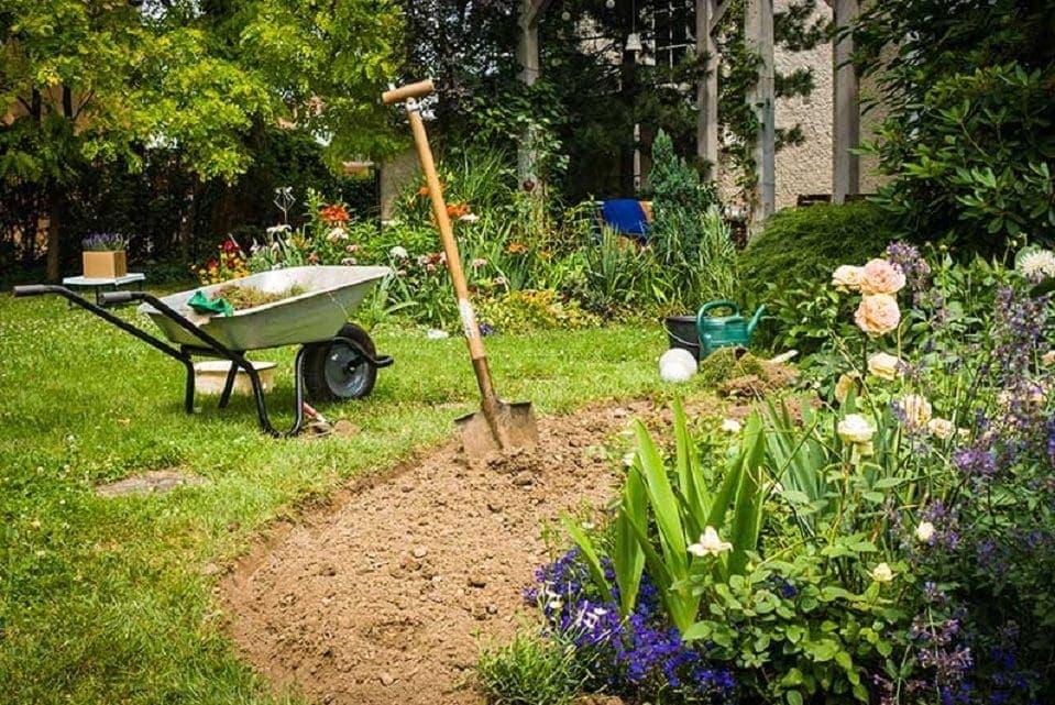 trồng hoa hồng từ đất bazan