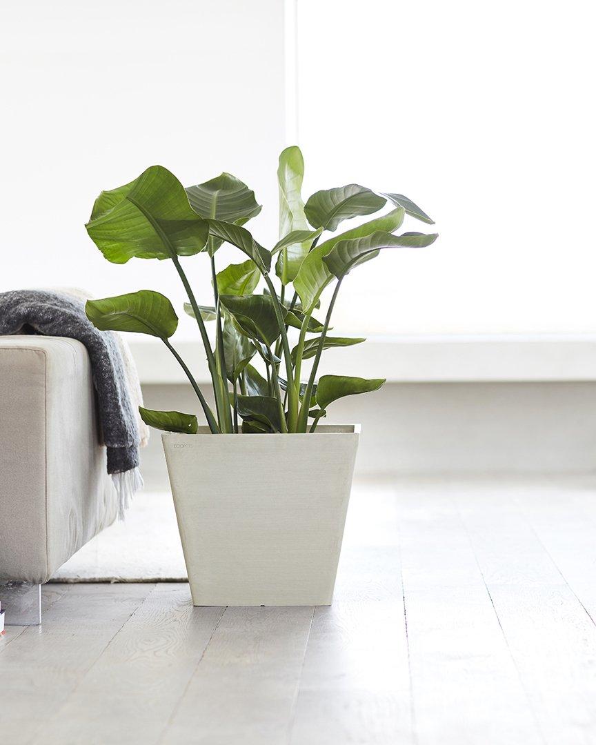 chậu nhựa trồng cây Ecopots 1