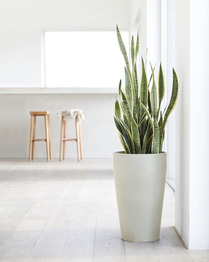 chậu nhựa trồng cây Ecopots 2
