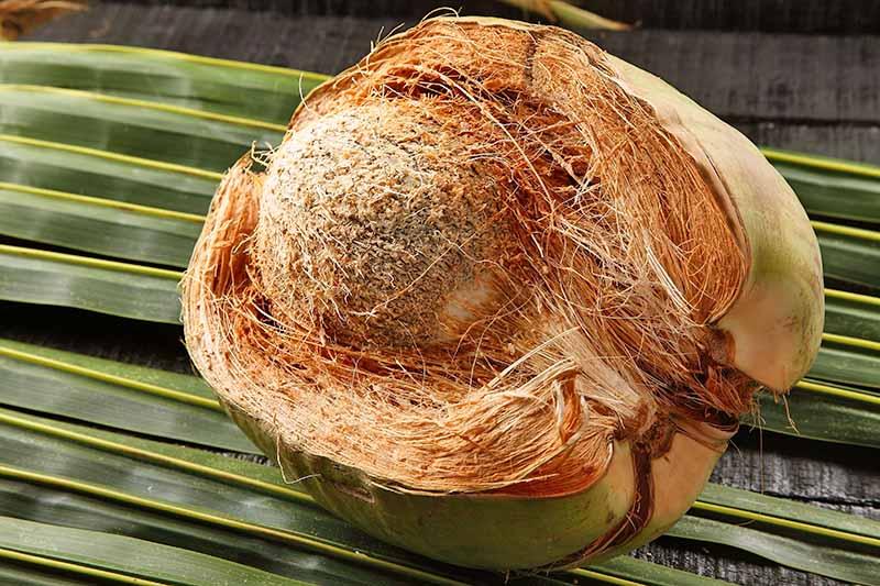 Ứng dụng xơ dừa trong nông nghiệp