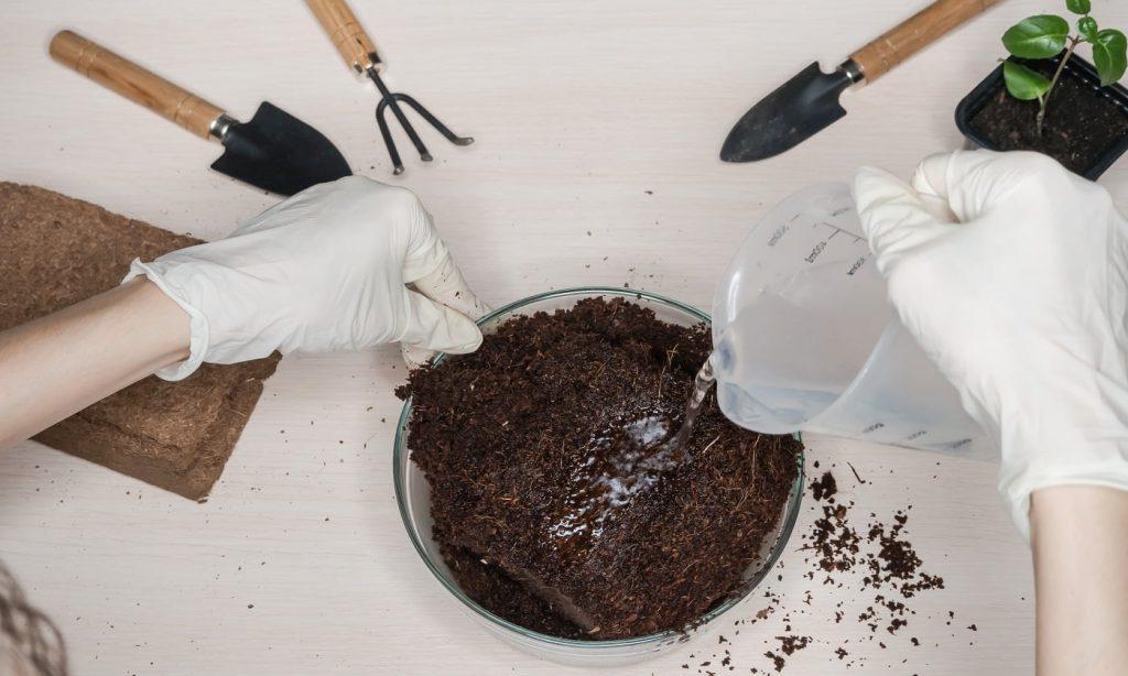 Cách xử lý xơ dừa trồng lan